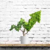 Potted green plant grows up in arrow shape over brick wall background. Concept business image
